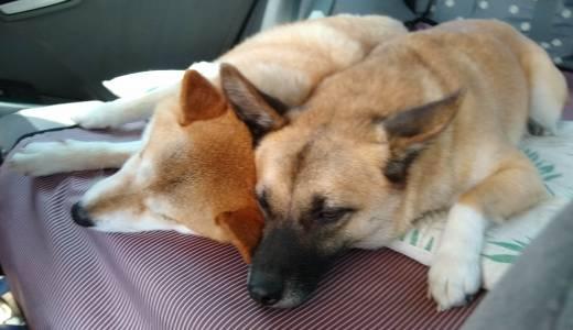 犬連れ夏の白馬旅行-一日目